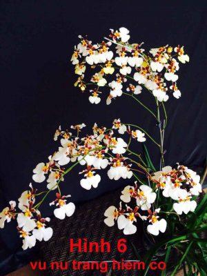 hoa lan vu nu