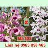 lan phi diep