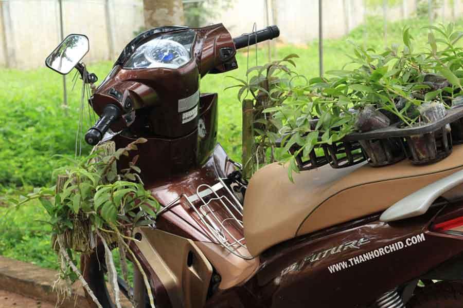 vườn lan thành nguyễn - hoa lan 268