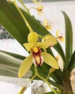 hình ảnh hoa lan kiếm vị hoàng 8